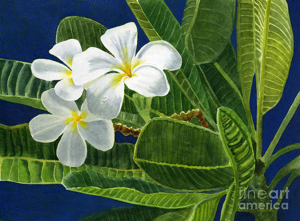 Tropical Flower Painting - White Plumeria Flowers With Blue Background by Sharon Freeman