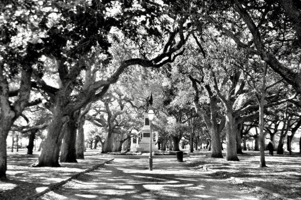 White Point Gardens At Battery Park Charleston Sc Black And White Art Print