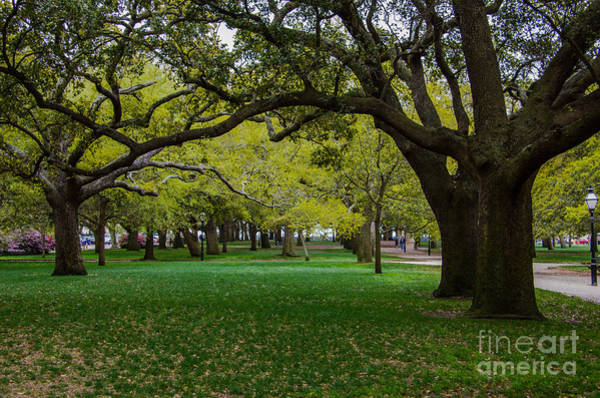 Photograph - White Point Gardens by Dale Powell