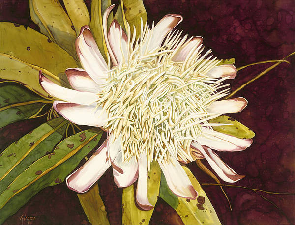 Painting - White Protea by Artimis Alcyone