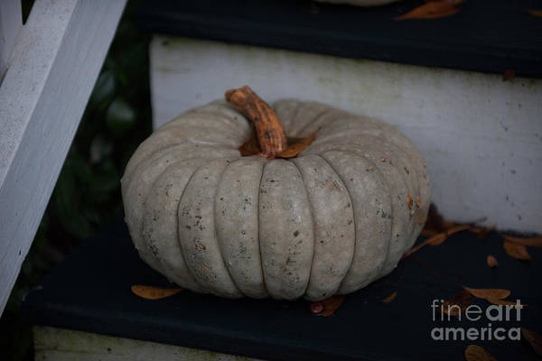 Photograph - White Pumkin by Dale Powell