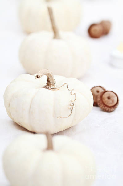 Acorn Squash Photograph - White Pumpkins And Acorns by Stephanie Frey