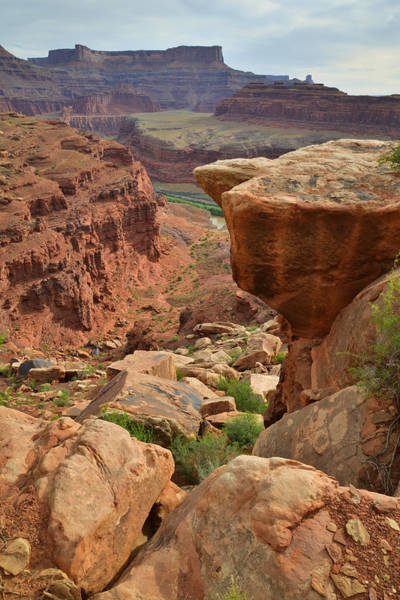 Photograph - White Rim Trail by Ray Mathis