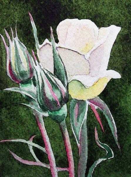 Painting - White Rose by Irina Sztukowski