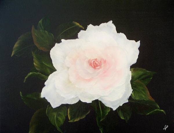 Painting - White Rose by Joni McPherson