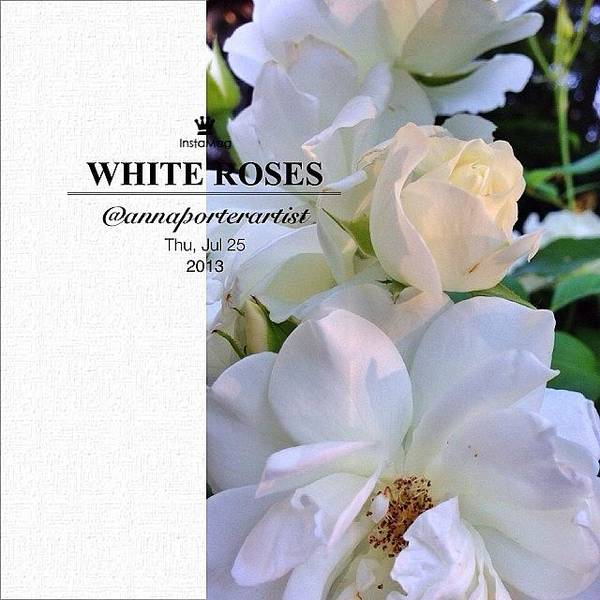 Petals Wall Art - Photograph - White Roses A Natural Bouquet by Anna Porter