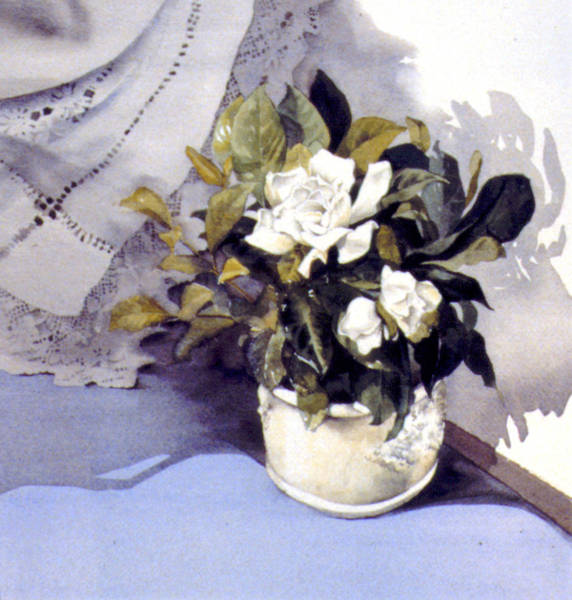 Wall Art - Photograph - White Roses by MGL Meiklejohn Graphics Licensing