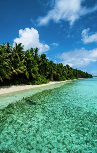 Micronesia Photograph - White Sand Beach In Turquoise Water by Michael Runkel