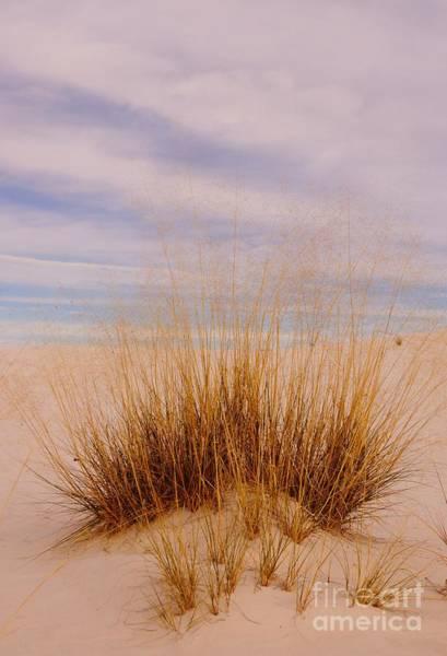 Photograph - White Sands Grass by Kerri Mortenson