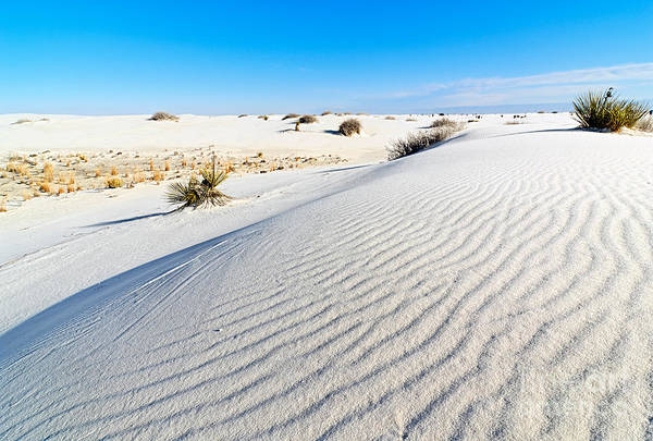 Chihuahuan Desert Photograph - White Sands - Morning View White Sands National Monument In New Mexico. by Jamie Pham