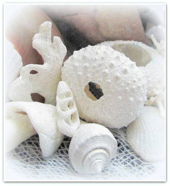 Photograph - White Seashells Macro Dream by Danielle  Parent