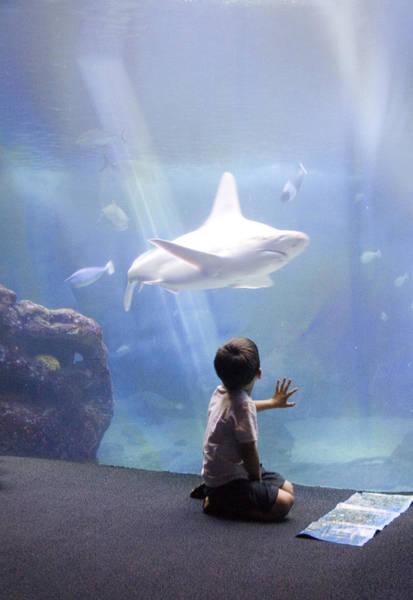 Hawaiian Fish Photograph - White Shark And Young Boy by David Smith