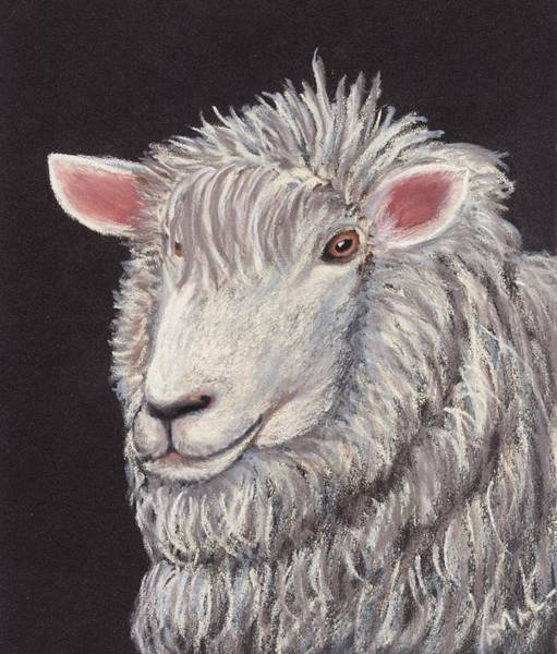 Painting - White Sheep by Anastasiya Malakhova