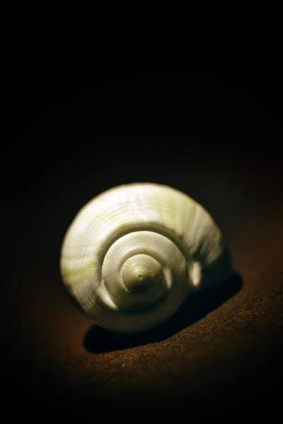 Photograph - White Shell by Jaroslaw Blaminsky