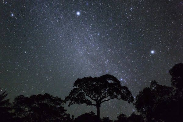 Dicot Wall Art - Photograph - White Silk Floss Tree And Starry T Sky by Konrad Wothe