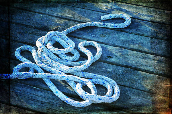 Photograph - White Snake by Randi Grace Nilsberg