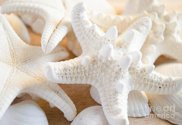 Photograph - White Starfish 2 by Andrea Anderegg