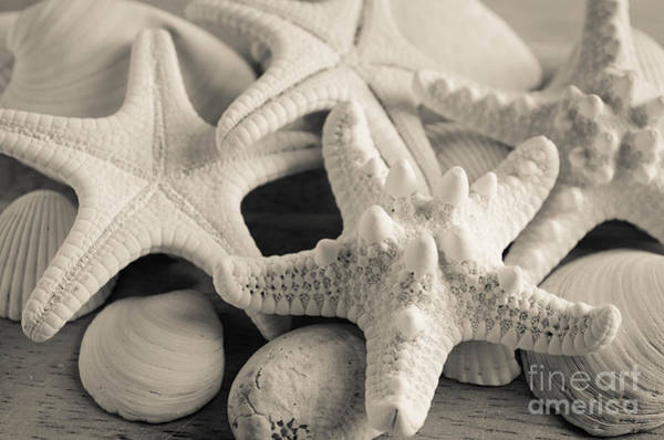 Photograph - White Starfish Black And White by Andrea Anderegg