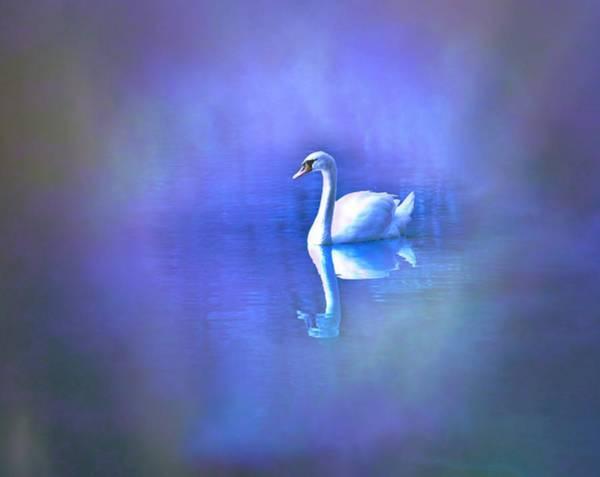 Sultry Digital Art - White Swan In Purple Fog by Lilia D