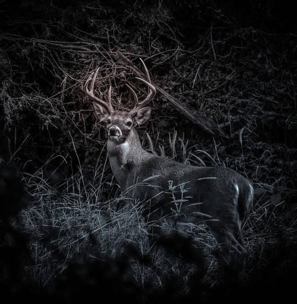 Photograph - White Tail Buck by John Johnson