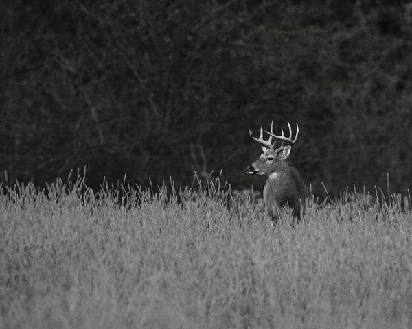Wall Art - Photograph - White-tailed Buck by Bruce J Robinson
