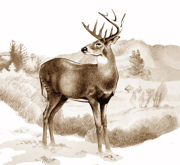 White Tailed Deer Drawing - White-tailed Stag by Patricia Howitt