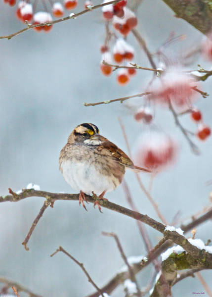 White-throated Sparrow Braving The Snow Art Print