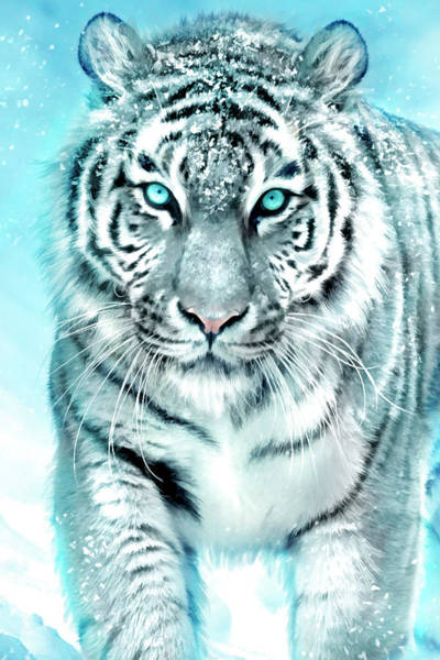 Wall Art - Painting - White Tiger by MGL Meiklejohn Graphics Licensing