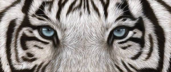 White Tiger Wall Art - Painting - White Tiger Eyes Painting by Rachel Stribbling