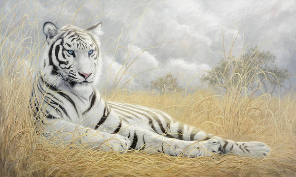 Wall Art - Painting - White Tiger by Lucie Bilodeau