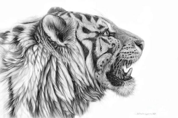White Tiger Drawing - White Tiger - Pantera Tigris Tigris by Svetlana Ledneva-Schukina