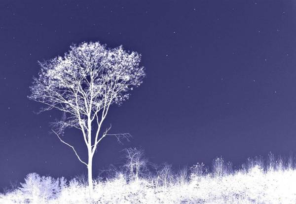 White Tree - Blue Sky - Silver Stars Art Print