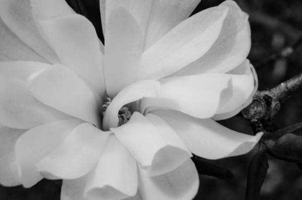 Photograph - White Tree Flower by Beth Sawickie