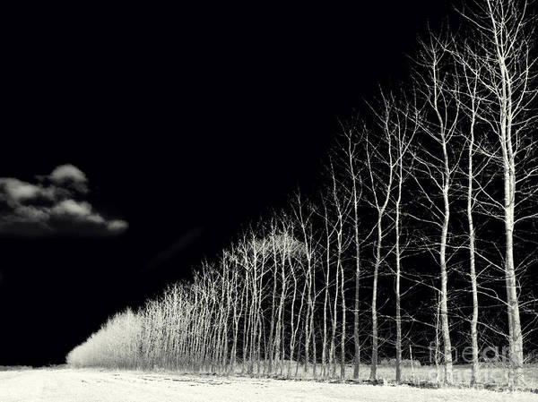 Wall Art - Photograph - White Trees by Stelios Kleanthous