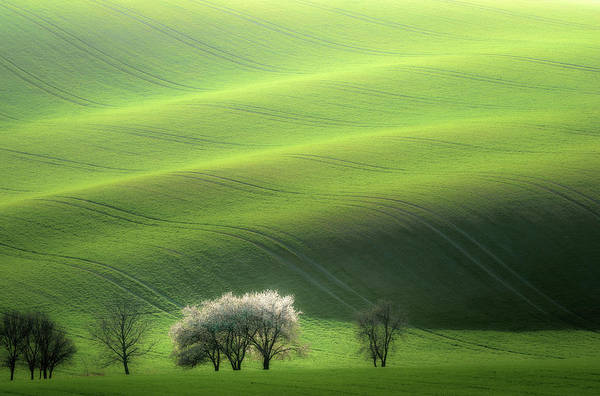 Green Grass Photograph - White Trio by Marek Boguszak