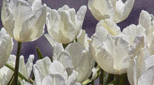Photograph - White Tulips 2 by Steven Huszar