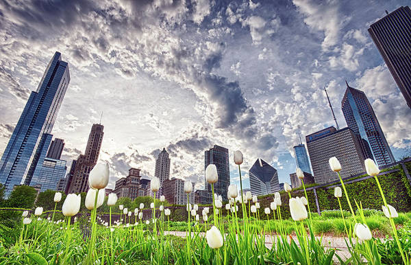 White Tulips And Skyline Art Print by By Ken Ilio