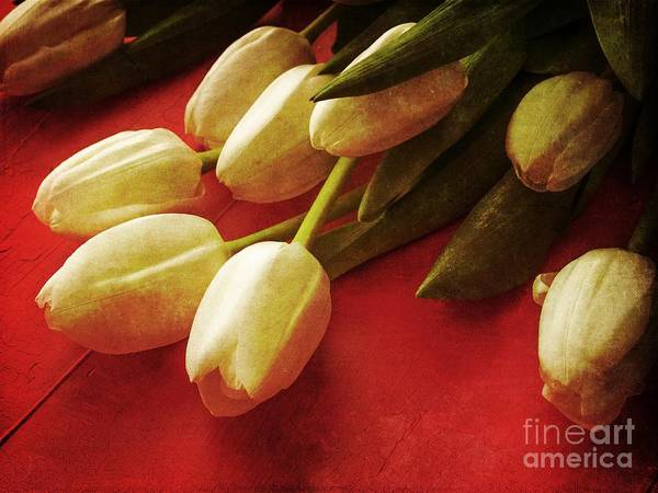 Photograph - White Tulips Over Red by Edward Fielding