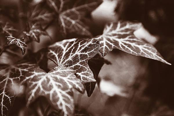 Digital Art - White Veins by David Davies