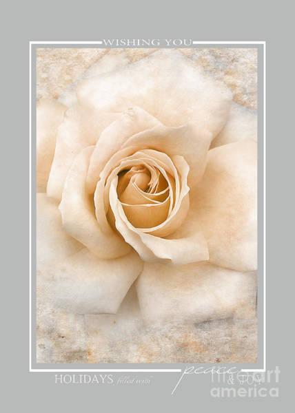 Photograph - White Vintage Rose Christmas Cards by Jai Johnson