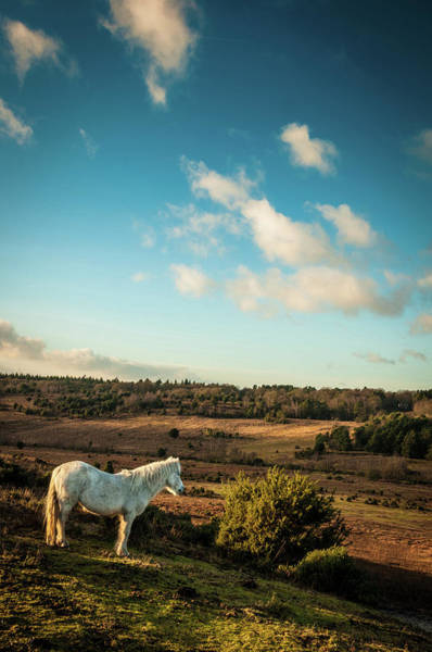 Mare Photograph - White Wild Horse In New Forest, England by Li Kim Goh