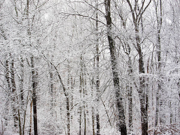 Photograph - White Winter World by Nancy De Flon