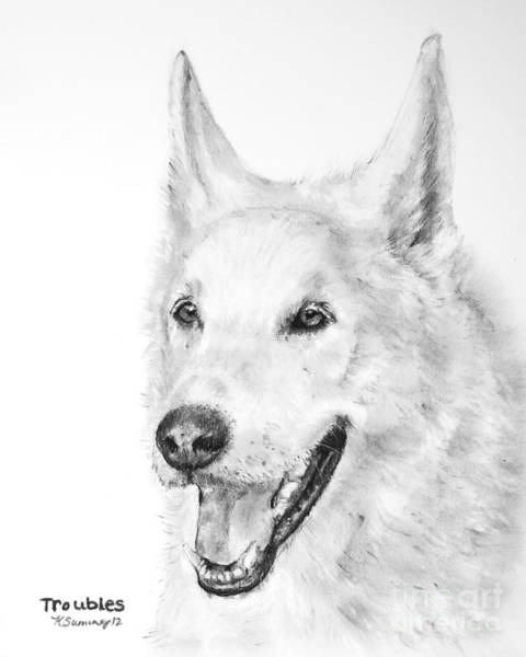 Drawing - White Wolf Dog Hybrid by Kate Sumners