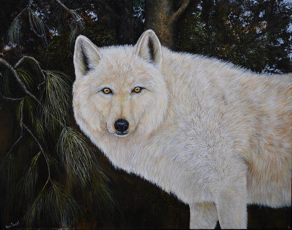 Painting - White Wolf In The Woods by Nancy Lauby