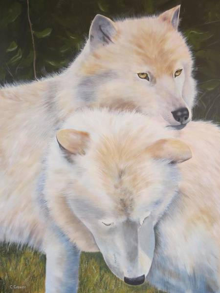Arctic Wolf Painting - White Wolves - Loup Blanc - Parc Omega by Christine Grenier