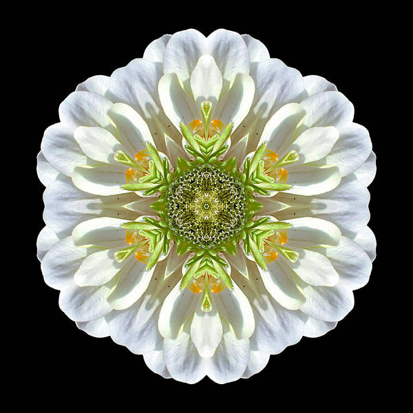 Photograph - White Zinnia Elegans II Flower Mandala by David J Bookbinder