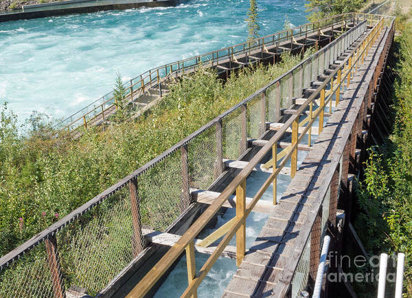 Diverted Wall Art - Photograph - Whitehorse Salmon Fishladder Yukon River Canada by Stephan Pietzko