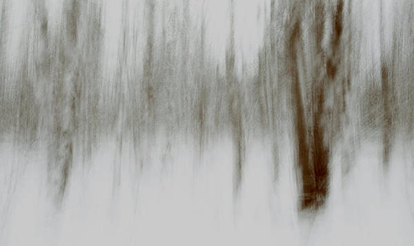 Henniker Wall Art - Photograph - Whiteout Trees by Scott Snyder