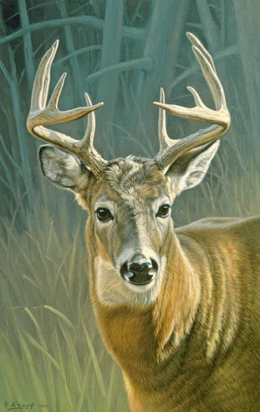 Wall Art - Painting - Whitetail Buck by Paul Krapf