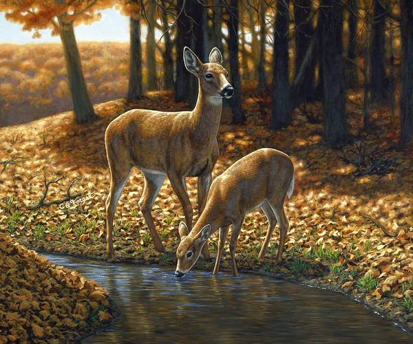 Whitetail Deer Wall Art - Painting - Whitetail Deer - Autumn Innocence 1 by Crista Forest